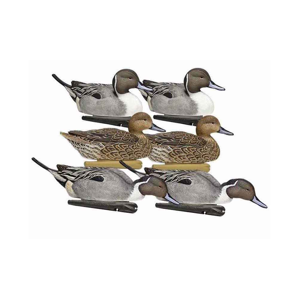 Formes de pilet AvianX actifs
