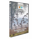 DVD Palombes, pigeons, une passion