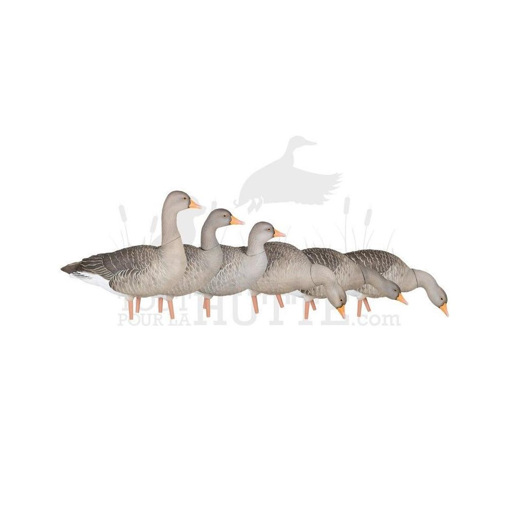 Formes d'oie cendrée sur pattes AvianX x6