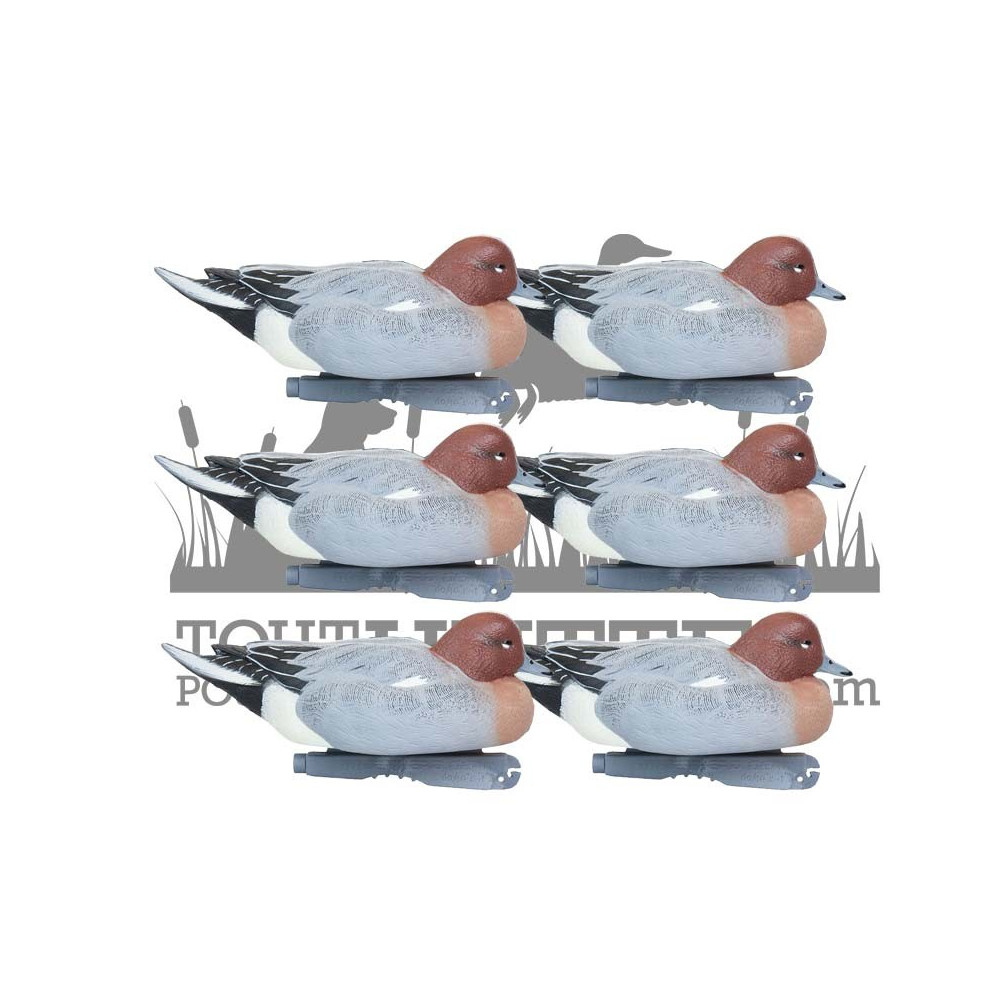 Formes de siffleur au repos mâles GHG x6