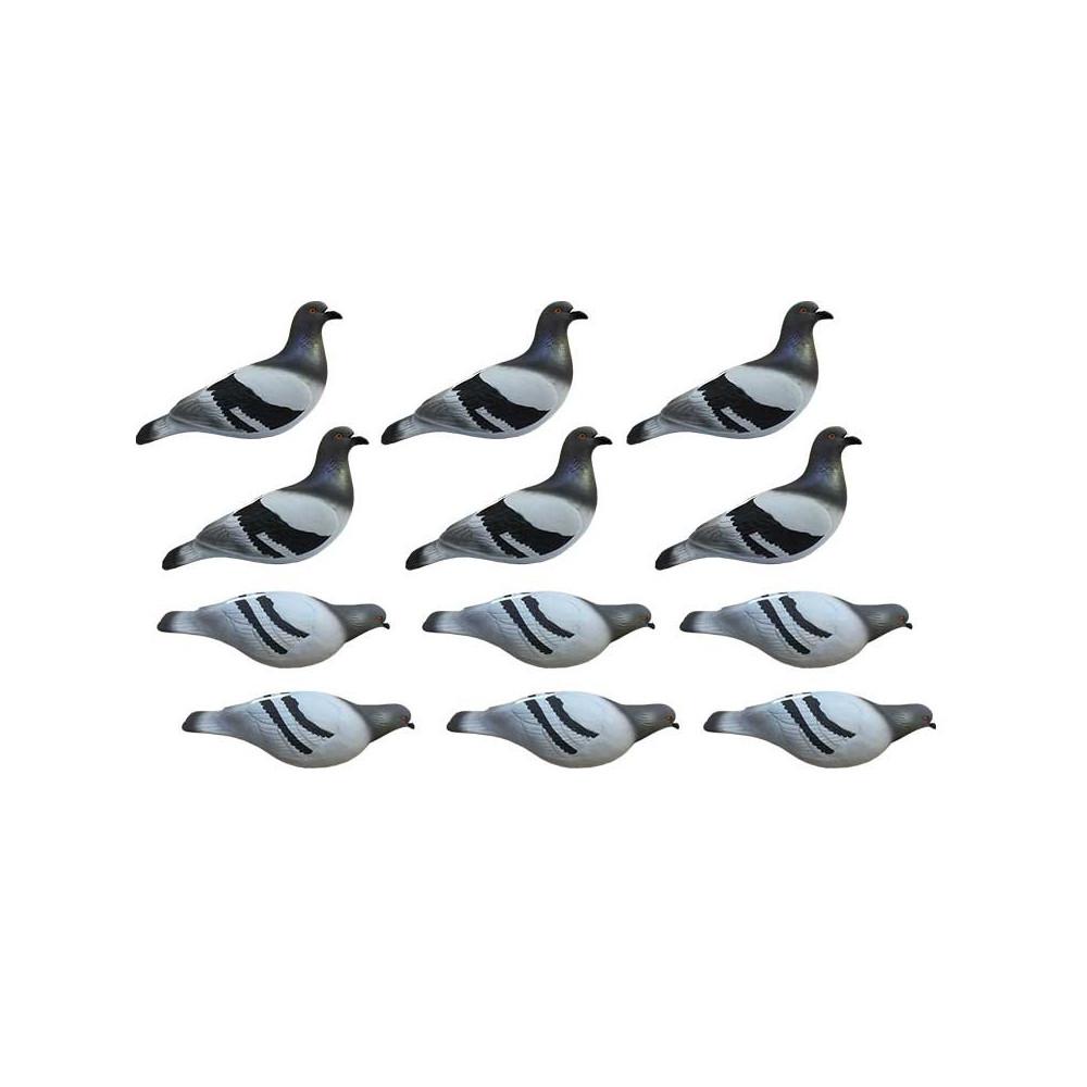 Formes de pigeon biset HD x12