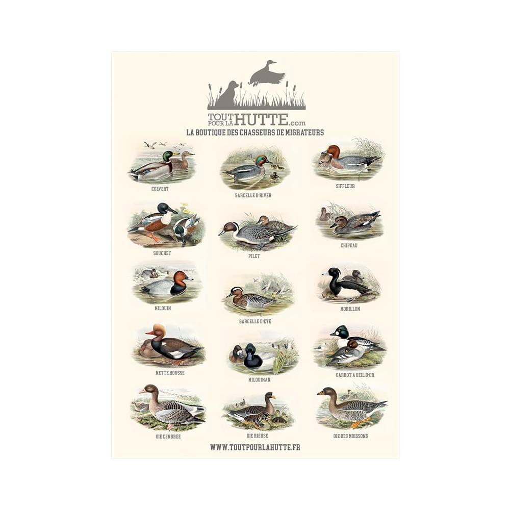 Poster Gibiers d'eau Toutpourlahutte