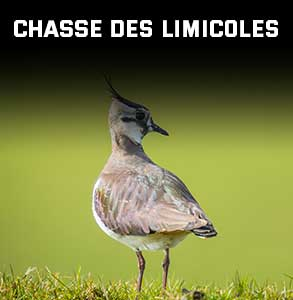 ico-chasse-limicoles.jpg