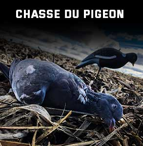 ico-chasse-pigeon.jpg