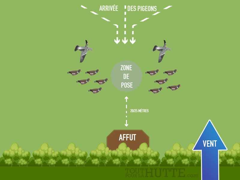Forme de pigeon hypaflap