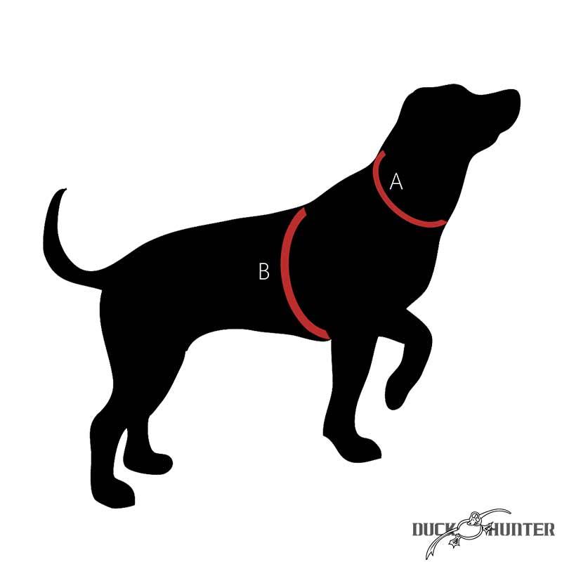 Prendre les mesures de son chien de chasse